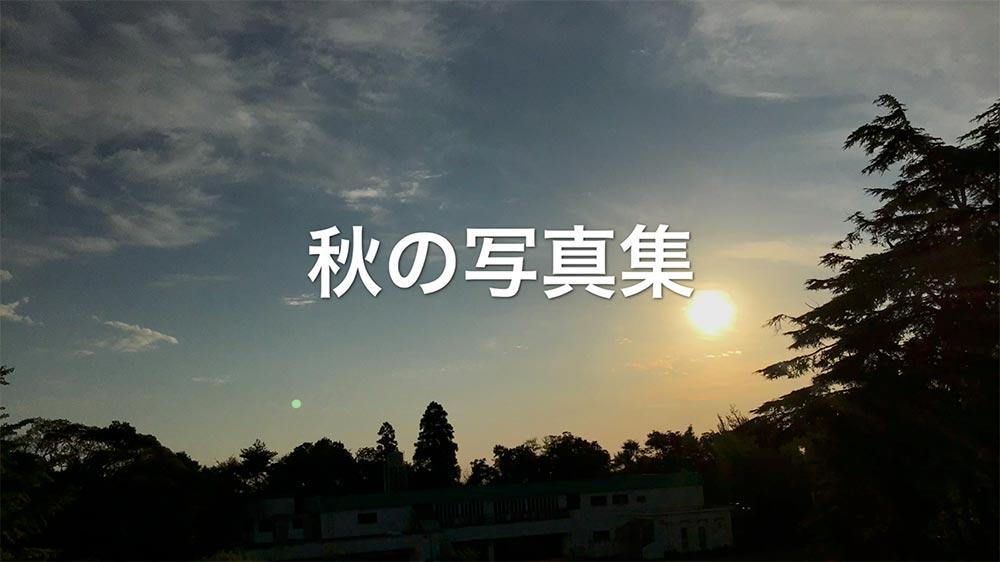 写真部秋の写真集サムネイル.jpg