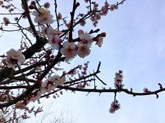 春の訪れ①b.jpg